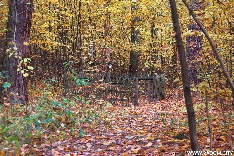 Radom. Groby w Lesie Kapturskim, na prawo od zielonego szlaku, widok ze szlaku.
