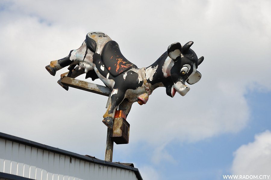 Radom. Krowa przy ul. Gdyńskiej.