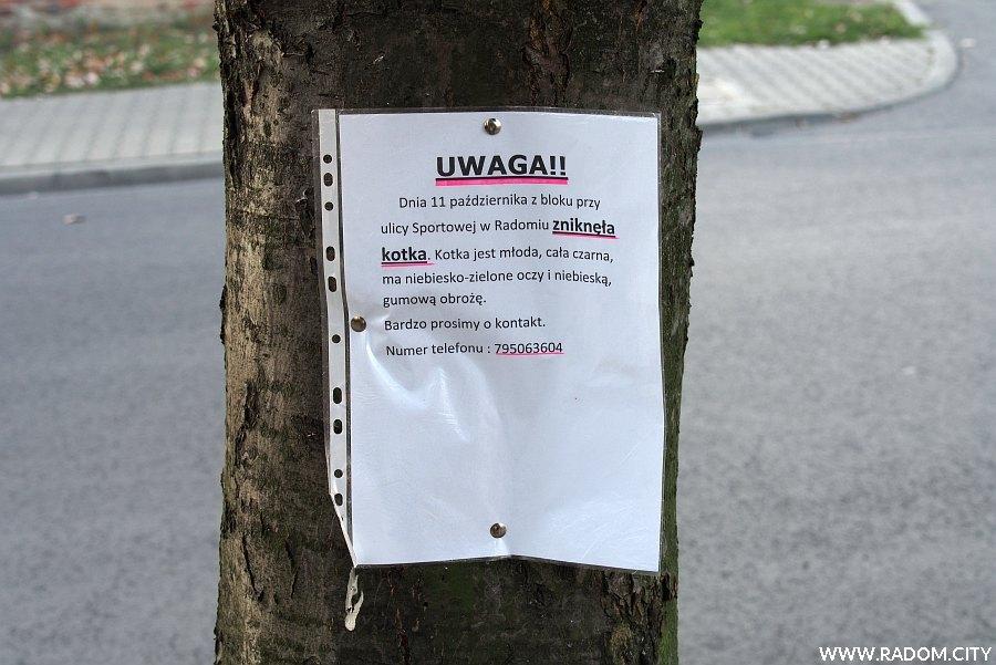 Radom. Ogłoszenie Sportowa/Czecha.