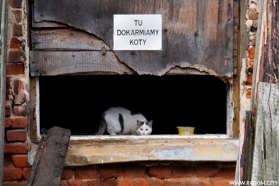 Radom. Punkt dokarmiania kotów w podwórzu kamienicy przy ul. Żeromskiego 11.