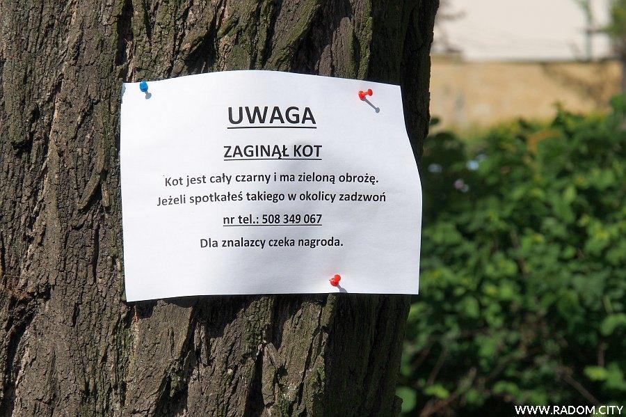 Radom. Ogłoszenie o zaginionym kocie na osiedlu XV-Lecia.