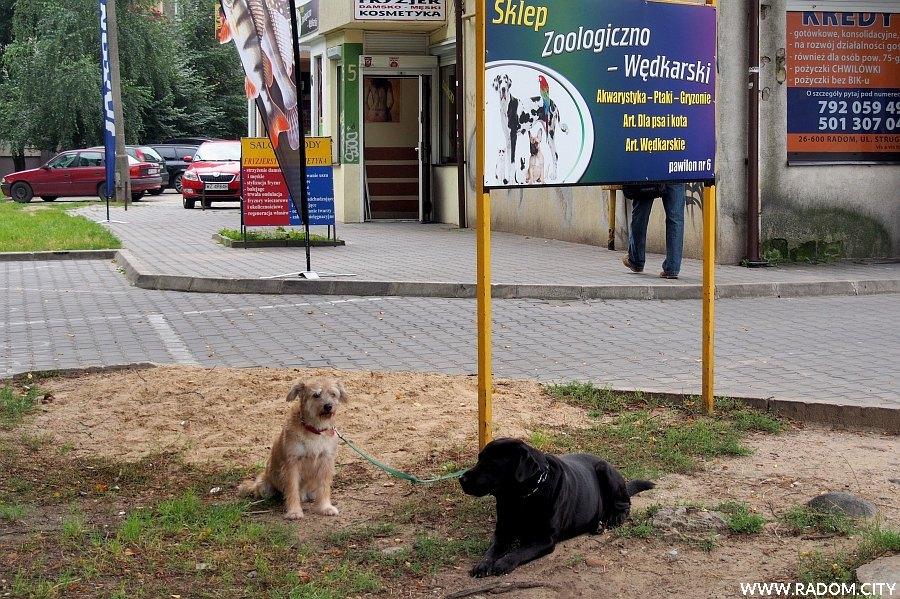 Radom. Psy przy ul. Struga.