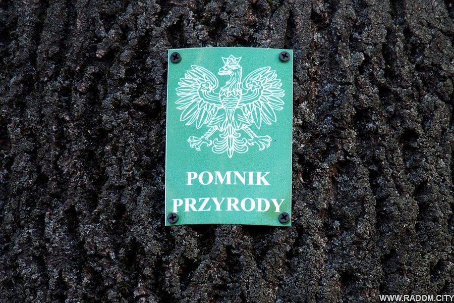 Radom. Aleja nad Sadkówką.