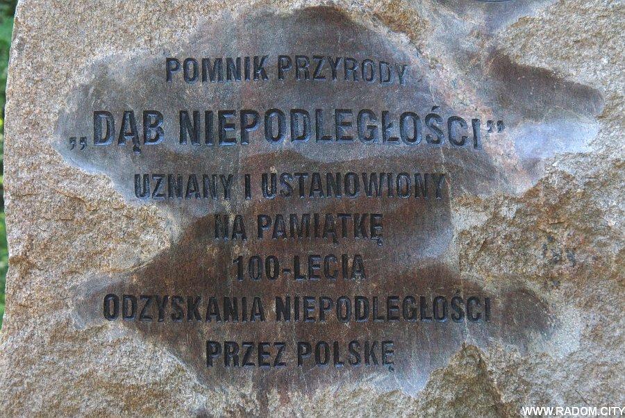 Radom. Dąb Niepodległości w Lesie Kapturskim.