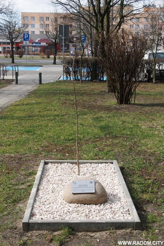 Radom. Dąb Pamięci dla uczczenia 100-lecia Wojskowej Służby Zdrowia.